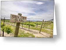 Sauvignon Blanc Grapes Growing In Vineyard Greeting Card
