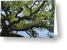 Savannah Live Oak And Spanish Moss Greeting Card