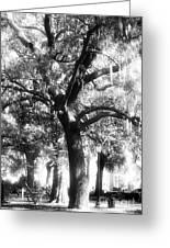 Savannah Oak Greeting Card