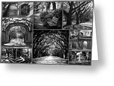 Savannah Shadows Collage Greeting Card
