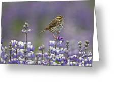 Savannah Sparrow And Nootka Lupine Greeting Card