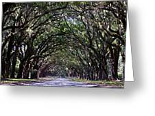 Savannah Wormsloe  Greeting Card