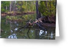 Save The Marsh Greeting Card