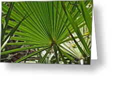 Saw Palmetto  Greeting Card