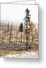 Sawback Burn, On Bow Valley Parkway Greeting Card