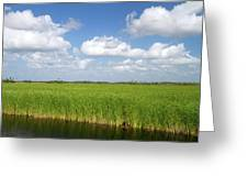 Sawgrass In The Florida Everglades Greeting Card
