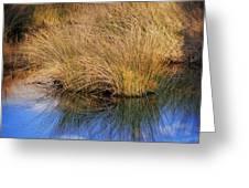 Sawgrass Greeting Card