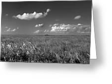 Sawgrass Prairie  Greeting Card by Andres LaBrada