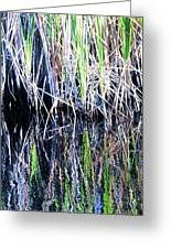 Sawgrass Reflections Greeting Card