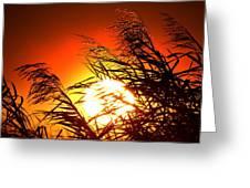 Sawgrass Sunset  Greeting Card