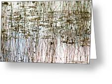 Sawgrass Swamp Panorama Greeting Card