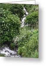 Sawpit Creek Greeting Card