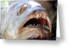 Fanged Fish Say Ahhhhhh Greeting Card