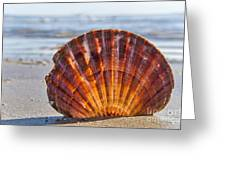 Scallop Shell 2 Greeting Card