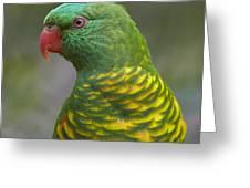 Scaly-breasted Lorikeet Australia Greeting Card