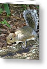 Scampering Squirrel Greeting Card