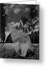 Scarf In The Winds In Black And White Greeting Card
