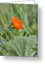 Scarlet Avens Orange Wild Flower Greeting Card