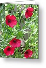 Scarlet Flax Greeting Card