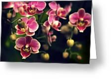 Scarlet Rain Greeting Card