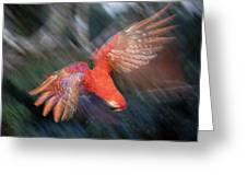 Scarlet Macaw Flying Amazon Basin Peru Greeting Card