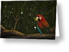 Scarlet Macaw Profile Greeting Card