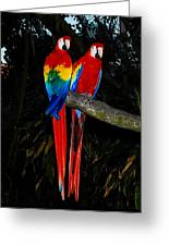 Scarlet Macaws Greeting Card