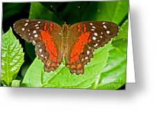 Scarlet Peacock Butterfly Greeting Card