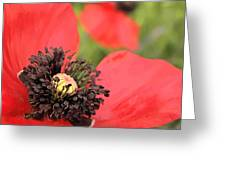 Scarlet Poppy Macro Greeting Card