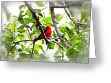 Scarlet Tanager - 11 Greeting Card