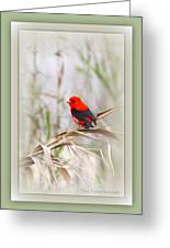 Scarlet Tanager 3630-10-ttp Greeting Card