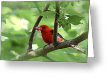 Scarlet Tanager - Fallout Greeting Card