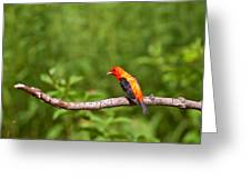 Scarlet Tanager On Snag Greeting Card