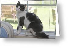 Scarlow Sitting In The Window Greeting Card