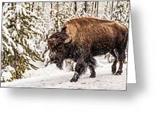 Scary Bison Greeting Card