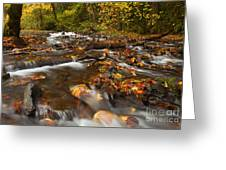 Scattered Leaves Greeting Card by Mike  Dawson