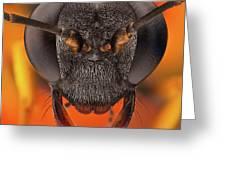 Sceliphron Spirifex 41 Greeting Card