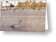 Scene At The Lake Greeting Card