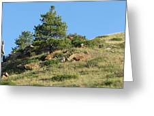 Scenic Hillside Greeting Card