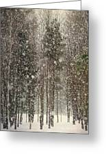 Scenic Snowfall Greeting Card