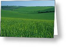 Scenic View Of A Field, South Downs Greeting Card
