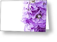 Scented Stocks Greeting Card