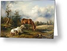 Schimmel Auf Fuchs Auf Der Weide Greeting Card