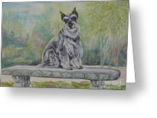 Schnauzer In Garden Greeting Card