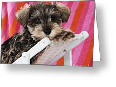Schnauzer Puppy Looking Over Top Greeting Card