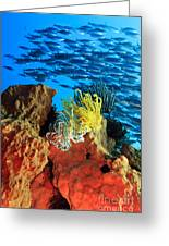 School Of Fishes Greeting Card