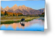 Schwabacher Morning Light  Greeting Card
