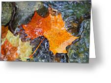 Scioto River Leaves Series 1 Greeting Card