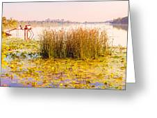Scirpus In The River Greeting Card