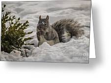 Sciurus Griseus Greeting Card